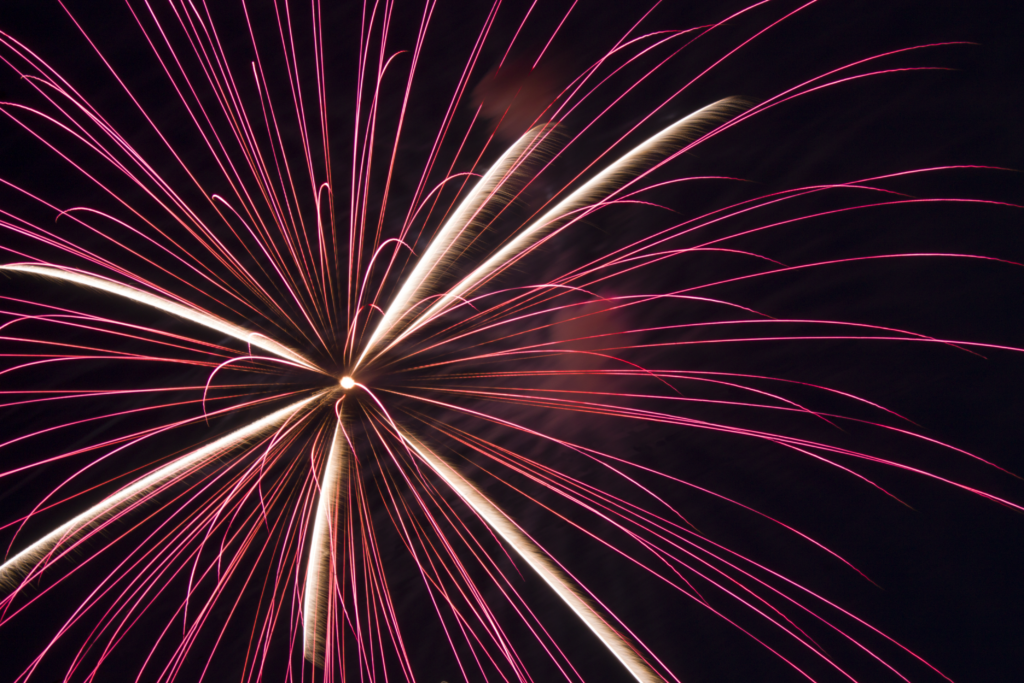 pink 4th of july firework